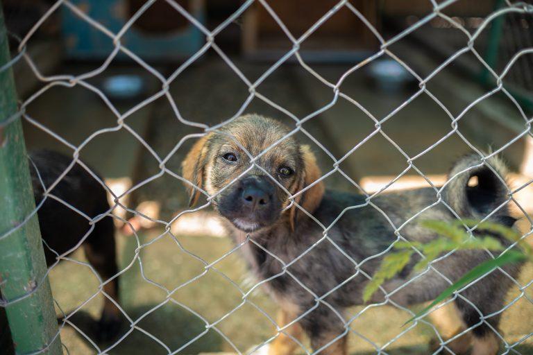 Amicii Dog Rescue - ALR Photography